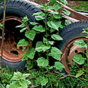 Tires And Ivy Art Print