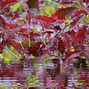 Tn Fall Water Art Print