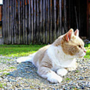 Toby Old Mill Cat Art Print by Sandi OReilly