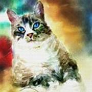 Toby The Cat Art Print