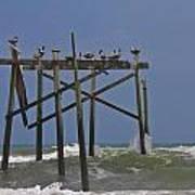 Topsail Ocean City Pelicans Art Print