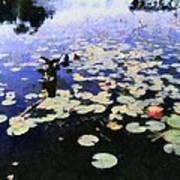 Torch River Water Lilies 3.0 Art Print