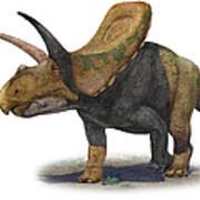 Torosaurus Latus, A Prehistoric Era Art Print
