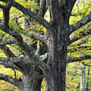 Tortured Trees Art Print