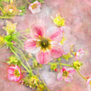 Touch Of Spring Art Print