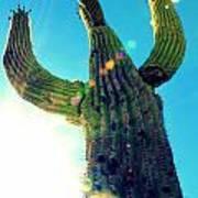 Towering Saguaro Art Print