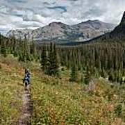Trail Through Bear Country Art Print