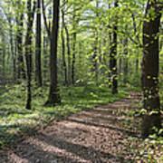 Trail Through Spring Forest Bavaria Art Print