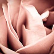 Transfigured Rose Art Print