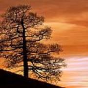 Tree Against A Sunset Sky Art Print