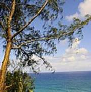 Tree And A Tropical Beach Art Print