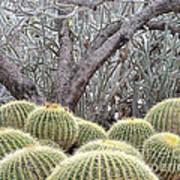 Tree And Barrel Cactus Art Print