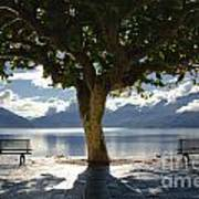 Tree And Benches Art Print