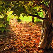 Tree And Shadows Art Print