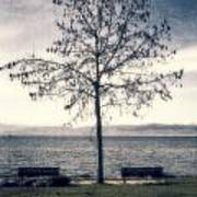 tree at lake Constance Art Print by Joana Kruse