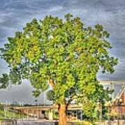 Tree At Newport On The Levee Art Print