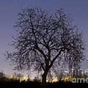 Tree At Night With Stars Trails Art Print