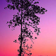 Tree At Twilight Art Print