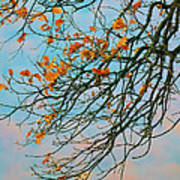 Tree Branches In Autumn Art Print