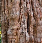 Tree Butts Art Print