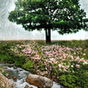 Tree By Stream Art Print