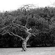 Tree Dancer Art Print
