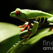 Tree Frog 13 Art Print