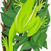 Tree Frog At Rest Art Print
