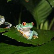 Tree Frog Art Print