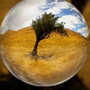 Tree In A Field Through A Glass Eye Art Print