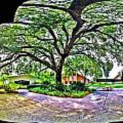 Tree In Church Yard - 4 Art Print