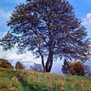 Tree In  English Park Art Print