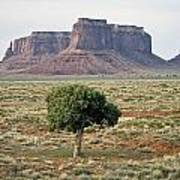 Tree In Monument Valley Art Print