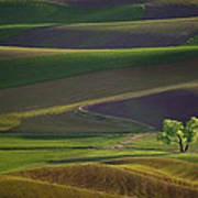 Tree In The Palouse Art Print