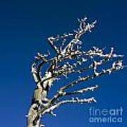 Tree In Winter Against A Blue Sky Art Print