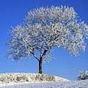 Tree In Winter, Co Down, Ireland Art Print