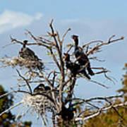 Tree Of Florida Cormorants Art Print