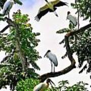 Tree Of Storks  Art Print