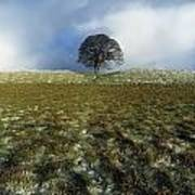 Tree On A Landscape, Giants Ring Art Print