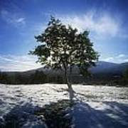 Tree On A Snow Covered Landscape Art Print