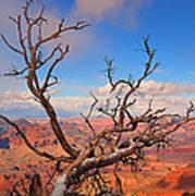 Tree Over Grand Canyon Art Print