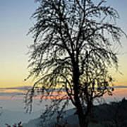 Tree Silhouette At Sunset 2 Art Print by Bruno Santoro