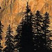 Tree Silhouettes In Front Of Cliff Face Art Print