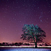Tree Snow And Stars Print by Paul McGee