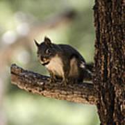 Tree Squirrel Art Print
