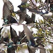 Tree Swallow Frenzy Art Print