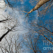 Tree Tops On The Wild Turkey Trail Art Print