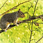Tree Visitor Art Print