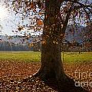 Tree With Autumn Leaves Art Print