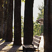 Trees And Bench Art Print
